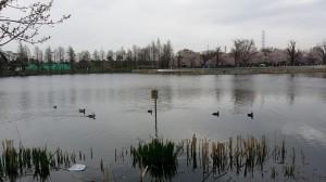 公園内の池での一コマ